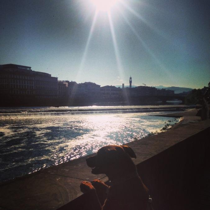 Tidigt morgonpromenad längst Arno floden